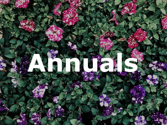 Shop Annuals