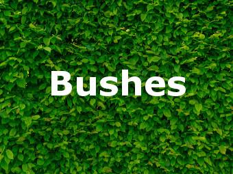 Shop Bushes