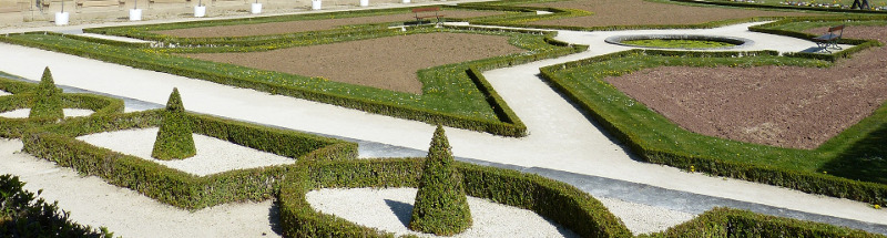 short-boxwood-shrubs-into-garden-border.jpg
