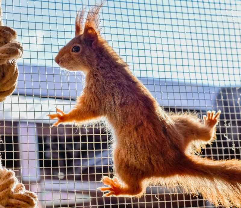 squirrel-climbin-on-chicken-wire.jpg