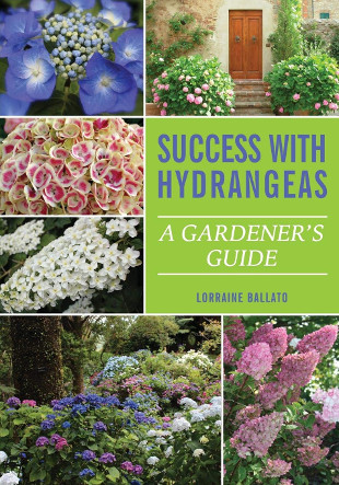 success-with-hydrangeas1.jpg