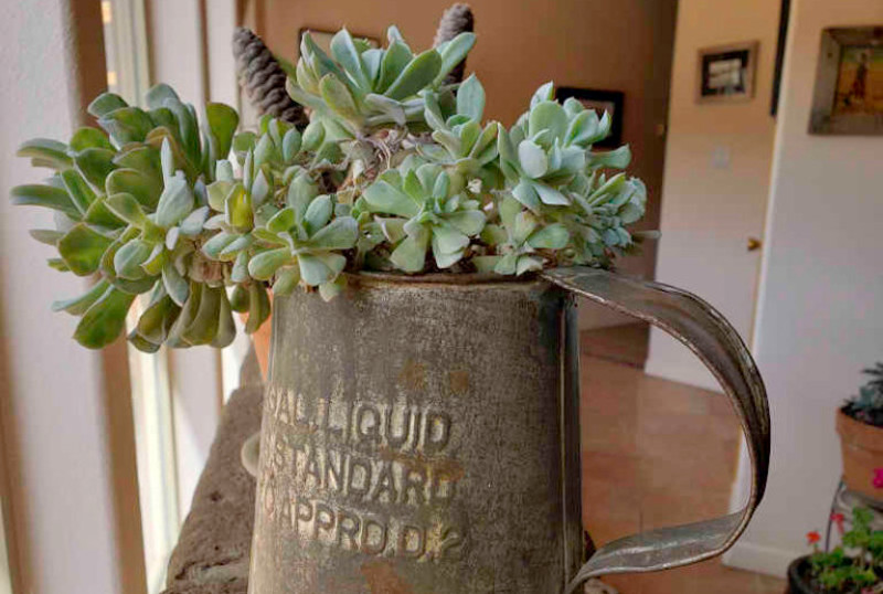 succulent-containers.jpg