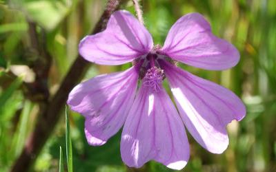 tubular-shaped-clematis-flower.jpg