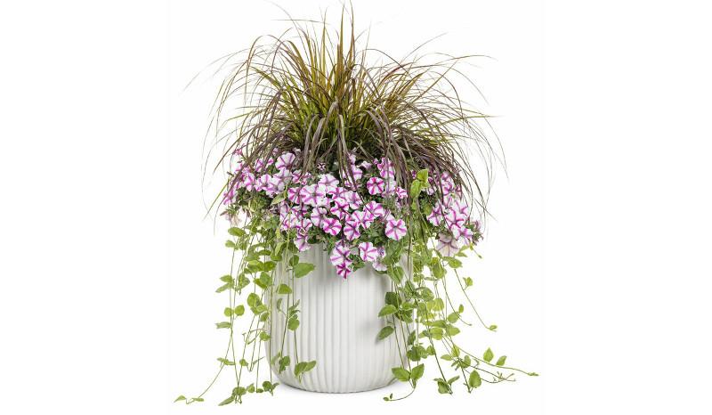 vinca-vine-planted-in-a-combination-planter.jpg