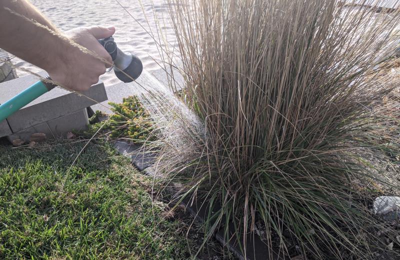 watering-established-ornamental-grass.jpg