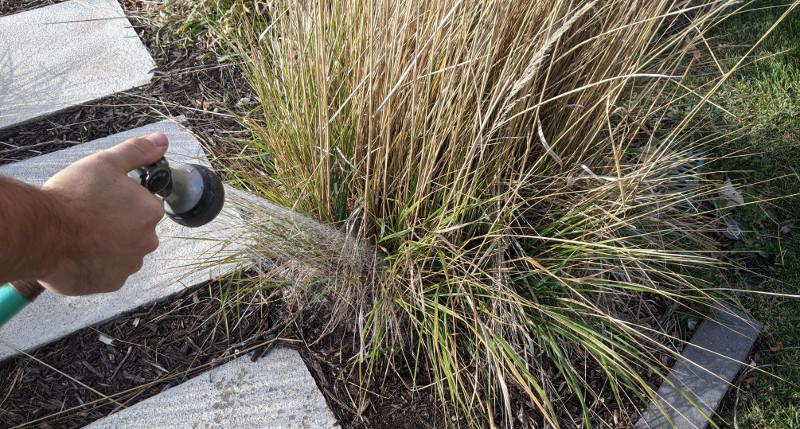 watering-ornamental-grass-next-to-garden-path.jpg