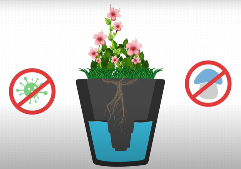 watering-plants-from-the-roots.png
