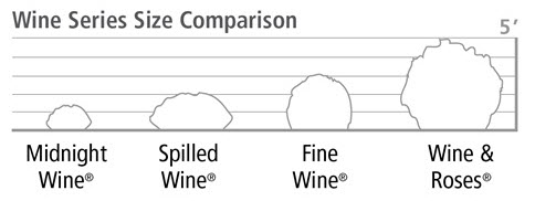 Wine Weigela Sizes Comparison Chart