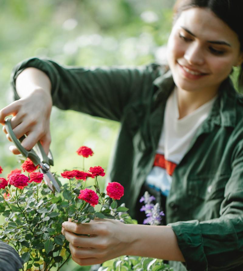 women-pruning-small-rose-plant.jpg