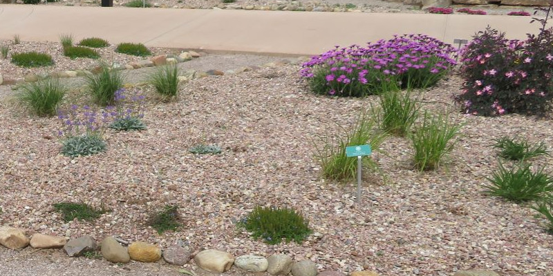 young-ornamental-grass-newly-planted.jpg