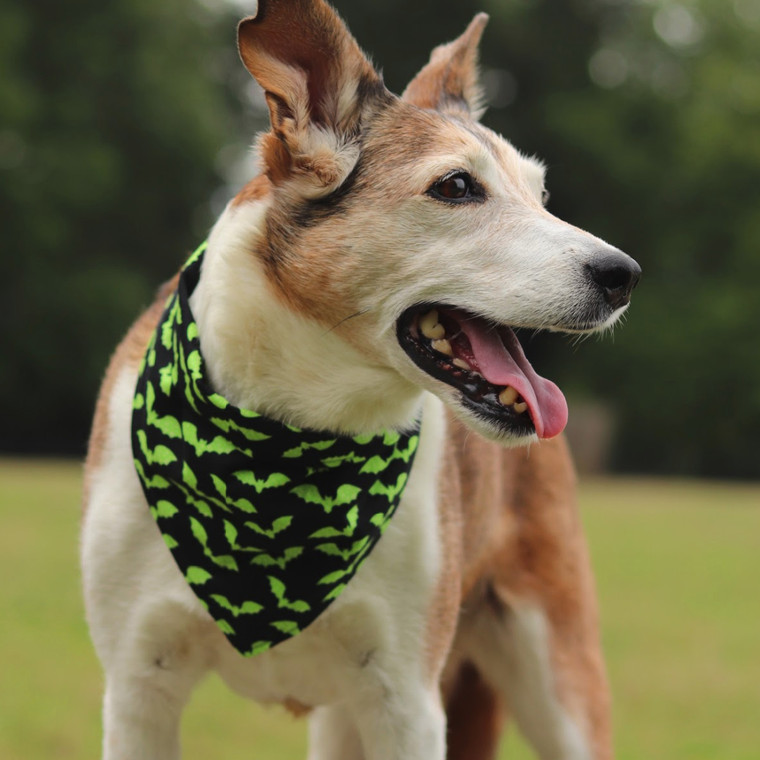 """Poppy is featured wearing batty bandana in size x-large. Her neck is approx. 17"""" (43.18 cm)"""