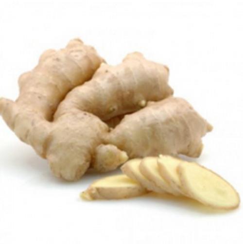 Ginger (FW)