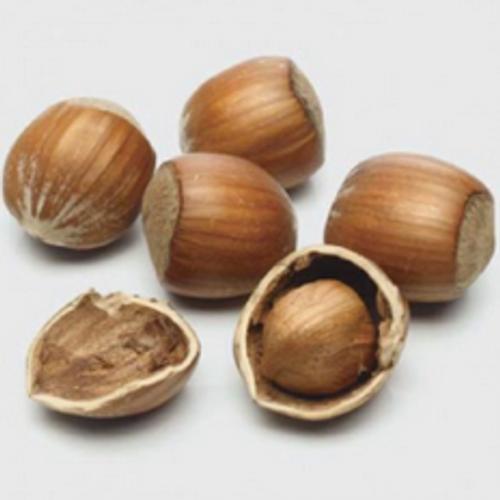 Hazelnut (FW)
