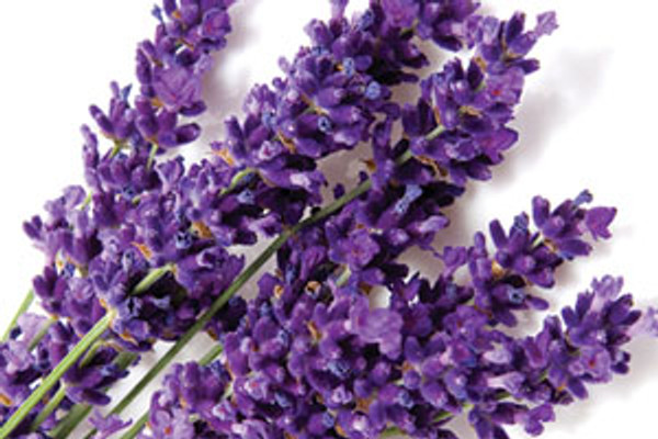 Pure Natural Body Lotion:  Lavender