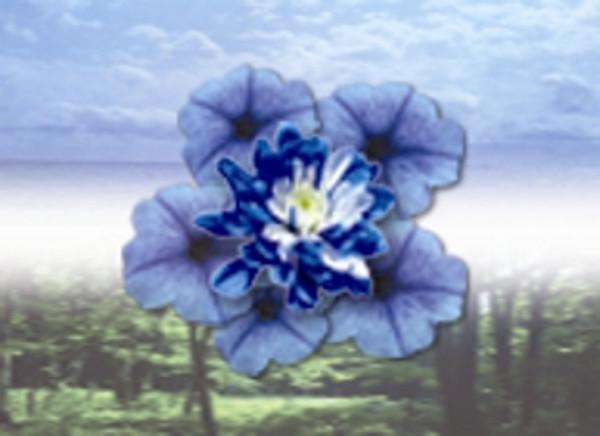 Blue Comfort Essential Oil Blend