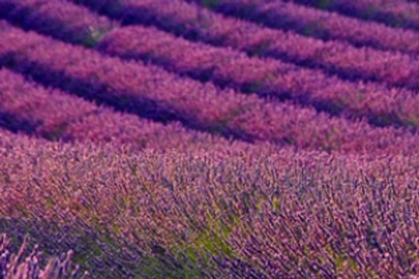 Lavender Moisturizing Body Wash
