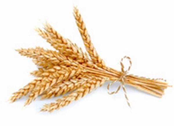 Wheat Germ Refined