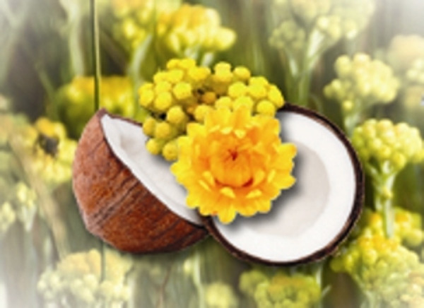 Helichrysum 10% in Fractionated Coconut