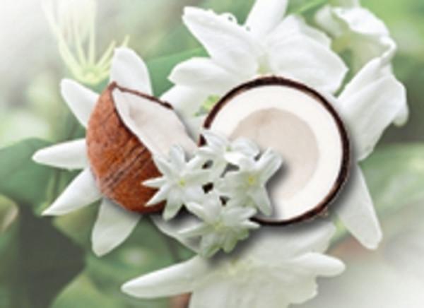 Jasmine Grandiflorum 10% in Fractionated Coconut