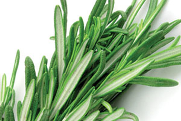 Aloe Vera Shampoo:  Rosemary
