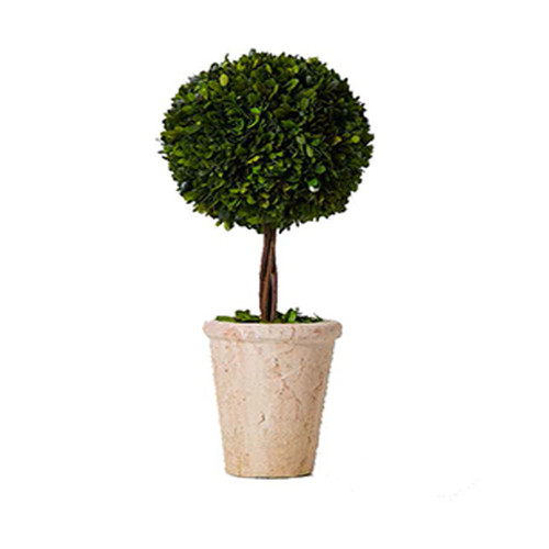 Preserved Boxwood Ball Topiary