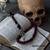 Memento Mori Paracord Rosary
