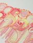 Autumn Swirl 26cm Rigid Lace