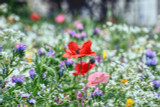 100% Wildflower Seed Sowing & Maintenance