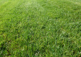 Lawn Fertiliser – all you need to know.