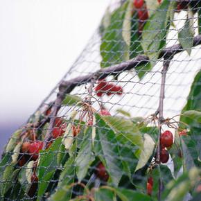 Economy Bird Netting