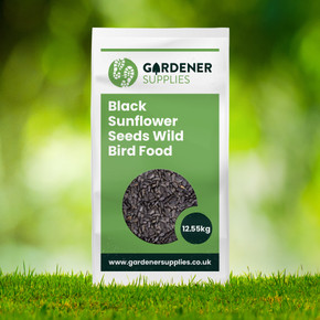 Black Sunflower Seeds Bird Food