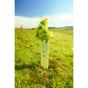 60cm Biodegradable Earthboard Shrub Shelter Guard