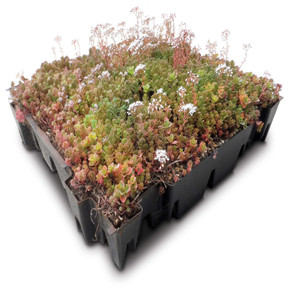 Sedum Green Roof Garden Trays