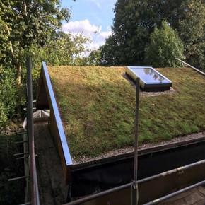 Sedum Green Roof Garden Matting