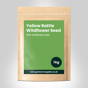Yellow Rattle Wildflower Seed