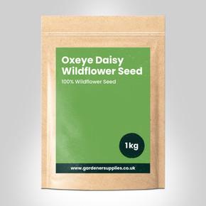Oxeye Daisy Wildflower Seed