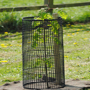 60cm Plastic Open Mesh Tree Guard and Support Stake Planting Package