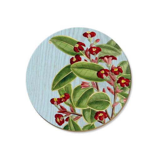 Karo plant - coaster