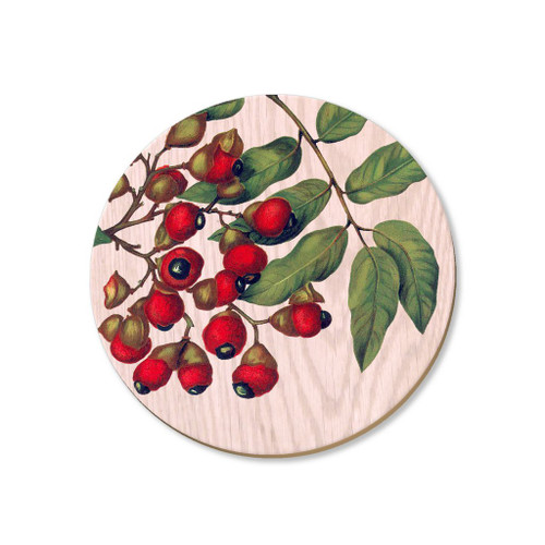 Titoki berries - coaster