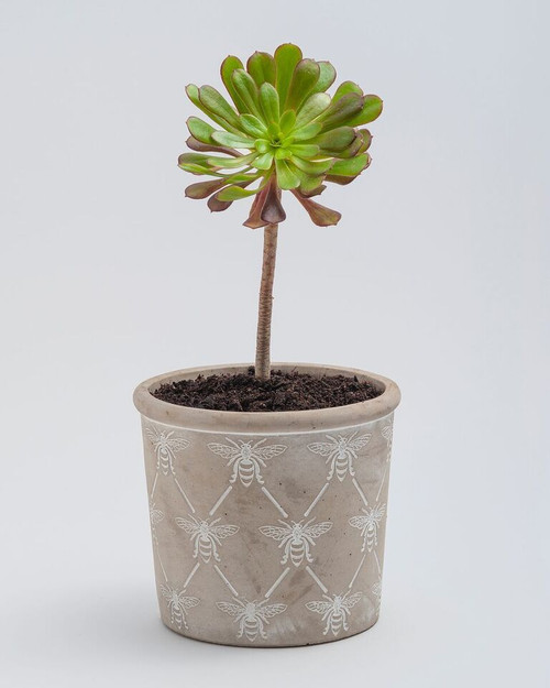 Bee planters - Pot Plant holders - available in 3 sizes