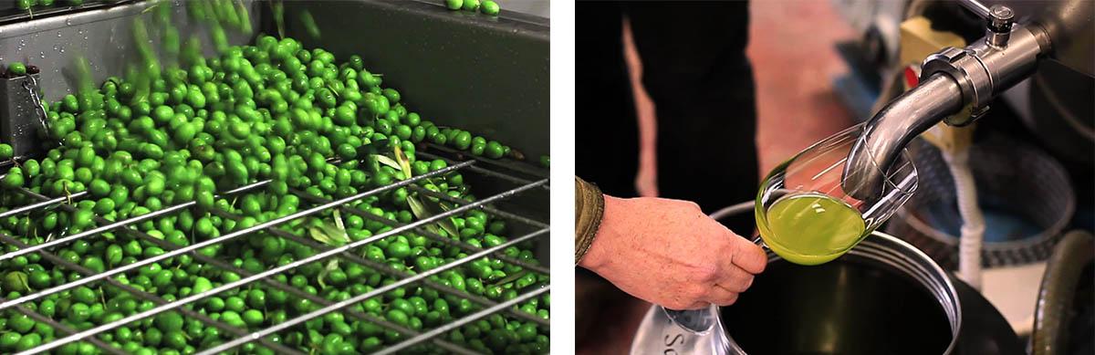 green-olives-golden-extravirgin-olive-oil-1-.jpg