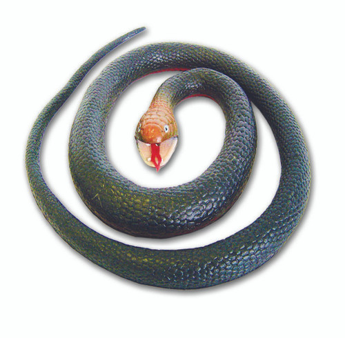 Snake - Red Bellied Black
