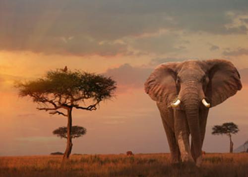 RAVENSBURGER - ELEPHANT OF THE MASSAI MARA PUZZLE 1000 PCE