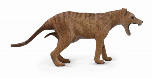 Collecta Thylacine (tasmanian Tiger)