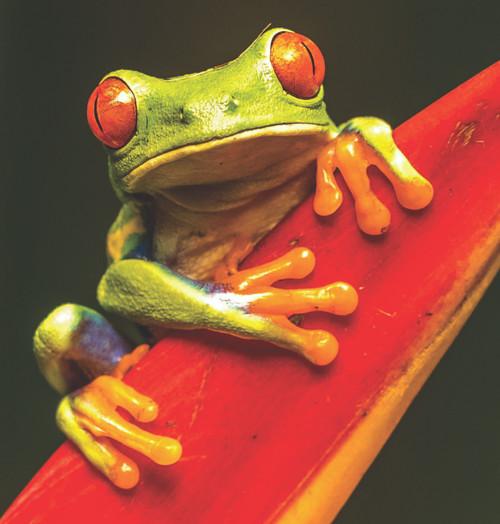 Diamond Art - Green Frog 30x30