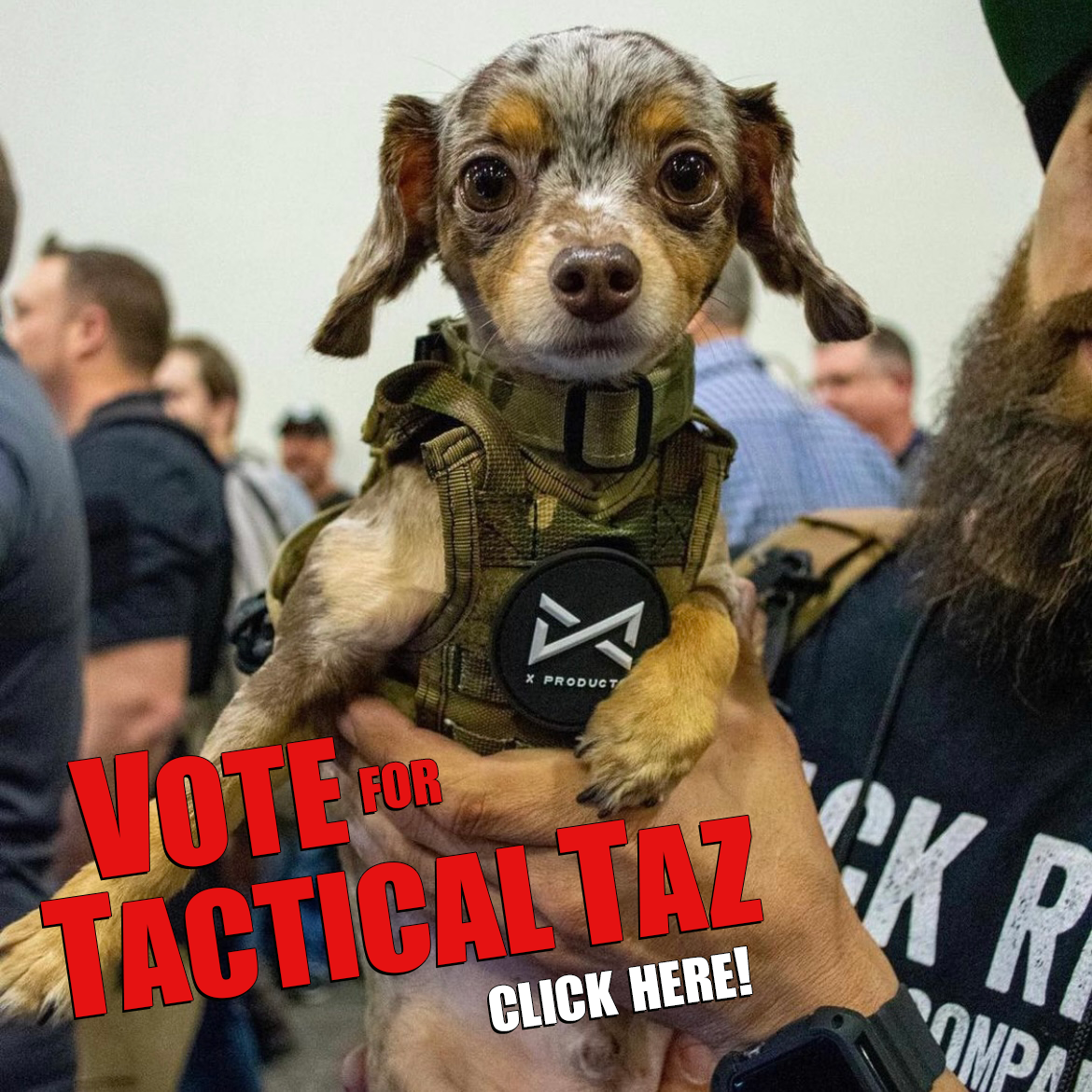 vote-for-tactical-taz.png