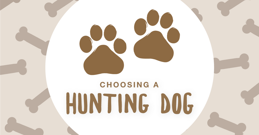 Choosing a Hunting Dog – Find Your Field Companion