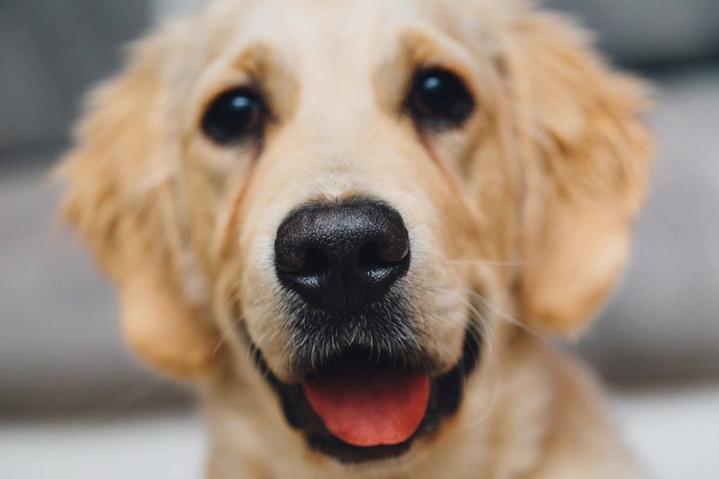 Best way to keep dog food and treats fresh- Vacuum seal!