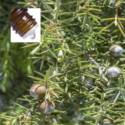 Cadewood Pure Essential Oil