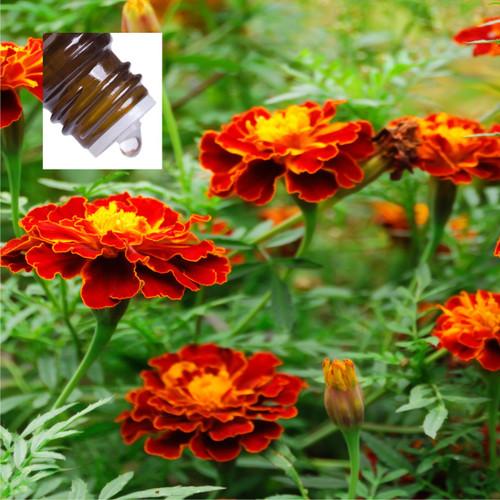 Calendula Absolute Pure Essential Oil